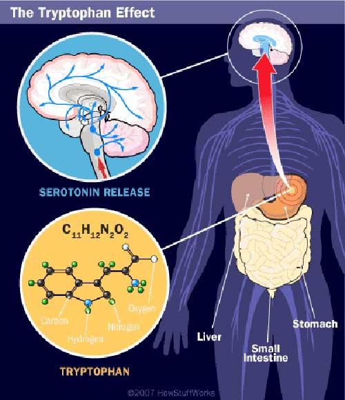 Vai trò của acid amin đối với sức khỏe