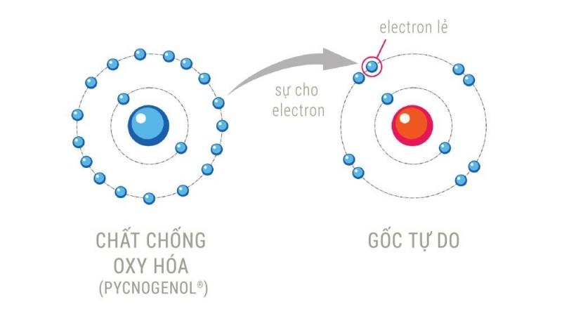 Chất chống oxy hóa trung hòa gốc tự do bằng cách nhường điện tử cho chúng