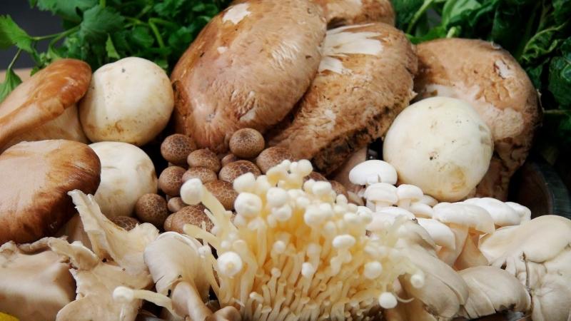 Nấm cũng là một thực phẩm có tác dụng chống ung thư hiệu quả