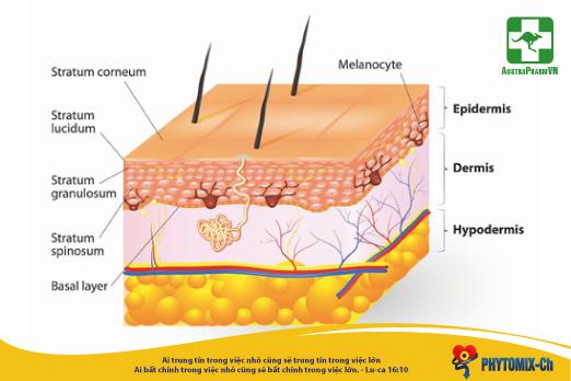 Tác dụng của phytosterol - Hợp chất thiên nhiên được FDA khuyên dùng trong phòng ngừa bênh tim mạch, nuôi dưỡng da