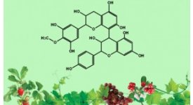 OPCs - hợp chất chống già thế hệ mới từ thiên nhiên