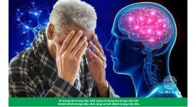 NGHIÊN CỨU VỀ TÁC DỤNG PHYTOSTEROL THỰC VẬT ĐỐI VỚI BỆNH ALZHEIMER